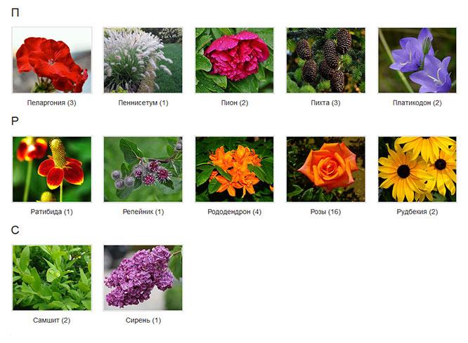 Красные садовые цветы фото с названием